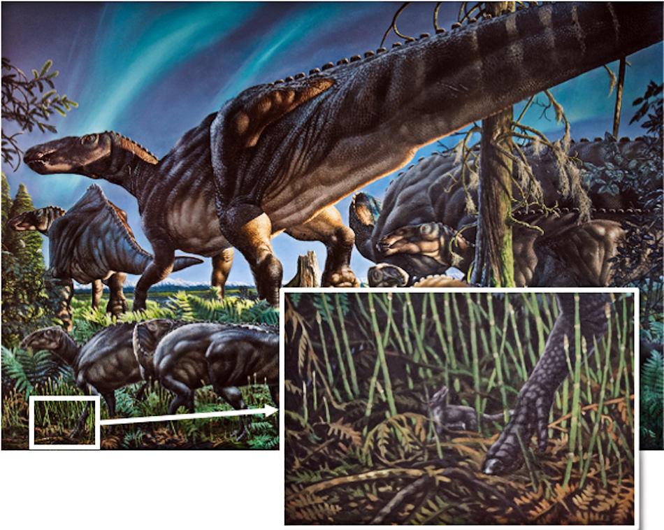 Gemäss den bisherigen Funden war die Region der heutigen North Slope in Alaska eine vielfältige und reichhaltige Landschaft mit grossen pflanzenfressenden Sauriern und daneben anderen Tierarten wie den aufstrebenden Säugetieren. Dazu zählte auch das neueste Mitglied der Beuteltiergruppe, Unnuakomys hutchinsoni. Bild: James Havens