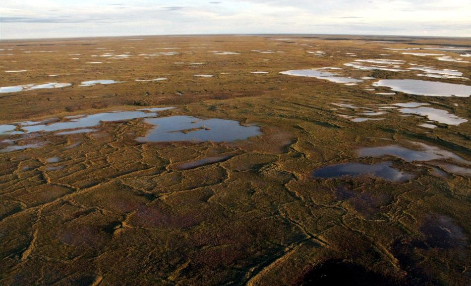 Typische flache Seen auf dem Alaska North Slope im Sommer. Die Gewässer sind im Durchschnitt etwa ein Meter tief und bedecken 20 bis 40 Prozent der Landfläche. Bild: Guido Grosse