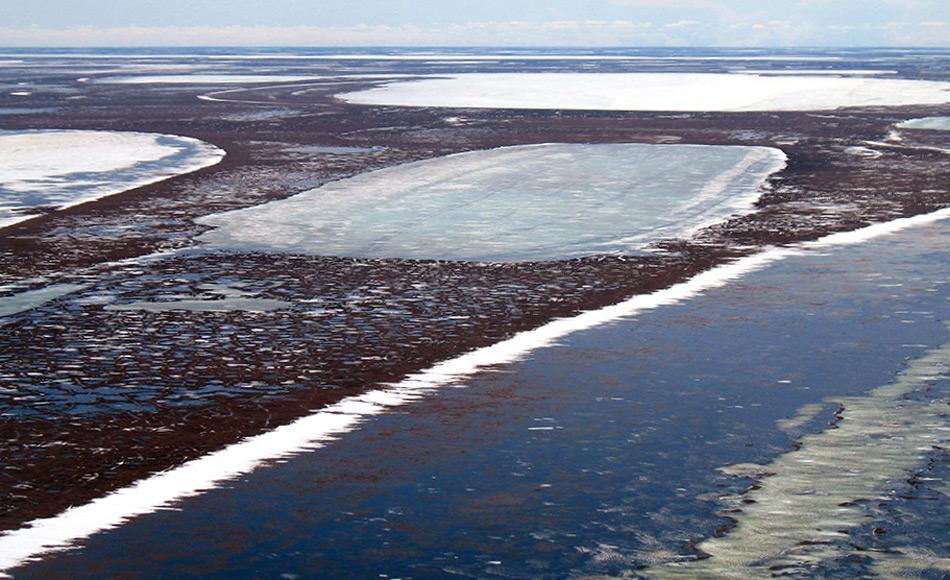 Dieselben Seen, die im Sommer grosse Teile Alaskas bedecken, waren früher eine einzige geschlossene Decke unter Eis und Schnee. Nun bleiben diese Teile sogar im Winter manchmal eisfrei. Bild: Christopher Arp